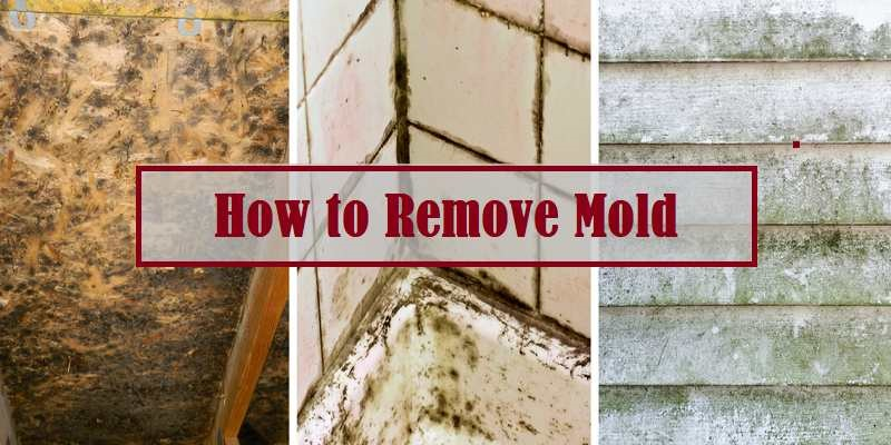 How-to-Remove-Mold